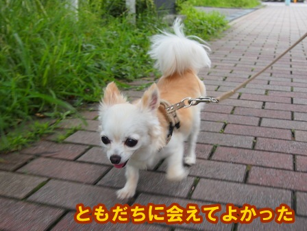 blog4226a.jpg