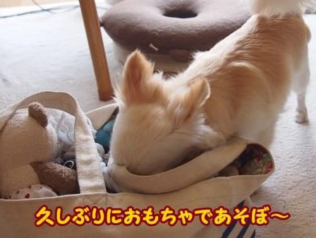 blog4246a.jpg