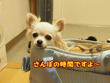 blog4286a.jpg