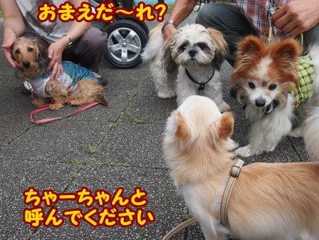 blog4291a.jpg