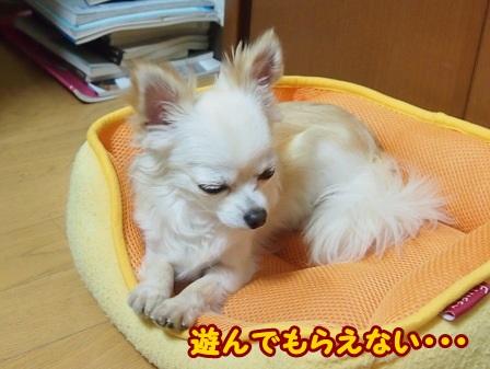 blog4292a.jpg