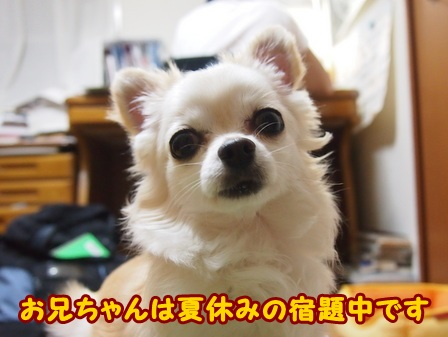 blog4293a.jpg