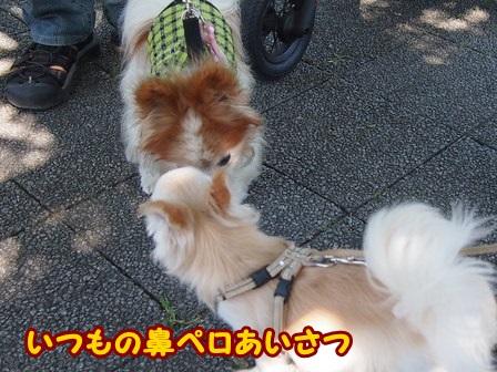 blog4308a.jpg