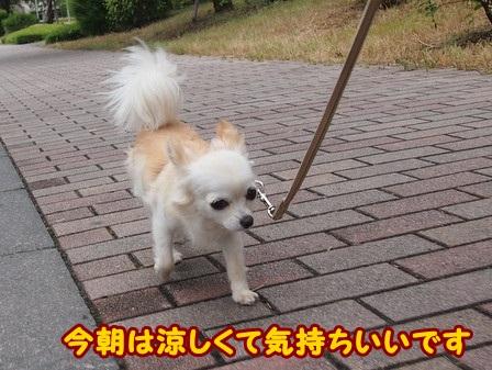 blog4368a.jpg