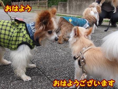 blog4370a.jpg