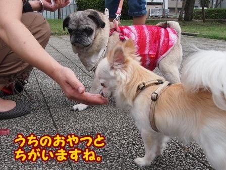 blog4373a.jpg