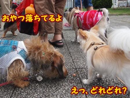 blog4374a.jpg