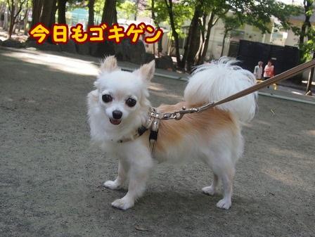 blog4415a.jpg