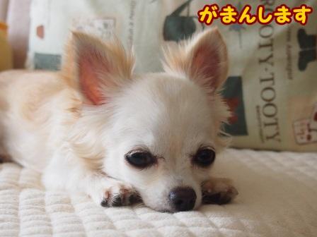 blog4442a.jpg
