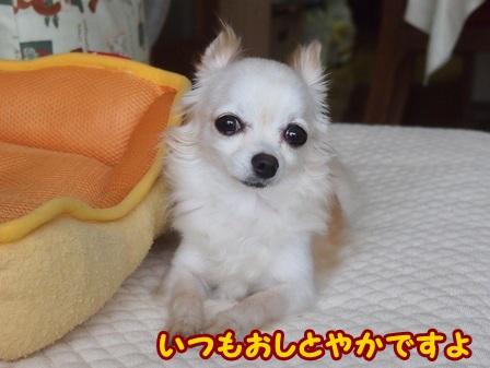 blog4445a.jpg