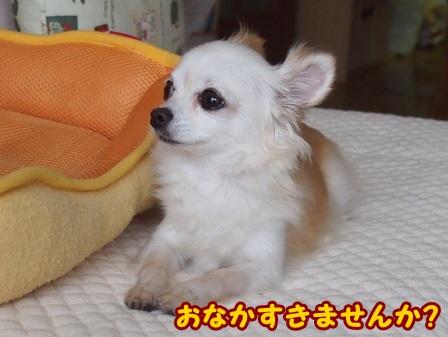 blog4447a.jpg