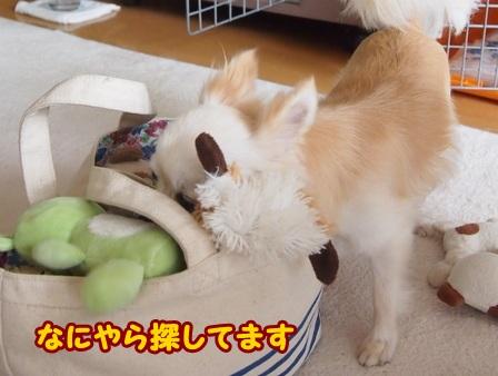 blog4481a.jpg