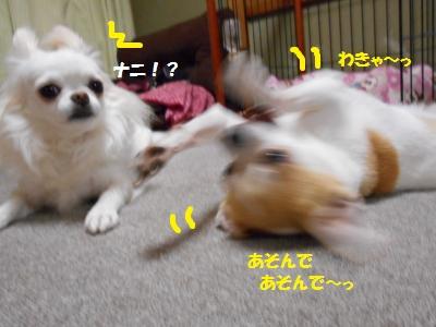 DSCN0159_convert_20140820105236.jpg