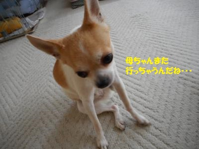 DSCN0484_convert_20140829142237.jpg