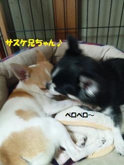 DSC_0195_convert_20140820104548.jpg