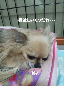 DSC_0946_convert_20140221150145.jpg
