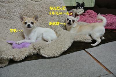 DSC_3403_convert_20140228103917.jpg