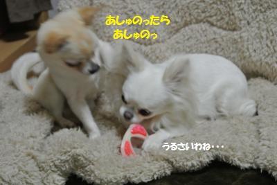 DSC_3460_convert_20140303092414.jpg