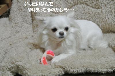 DSC_3463_convert_20140303092440.jpg