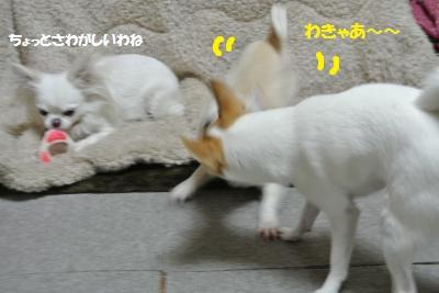 DSC_3465_convert_20140303092531.jpg