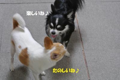 DSC_3529_convert_20140311130626.jpg