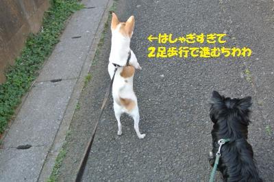 DSC_3629_convert_20140310133714.jpg