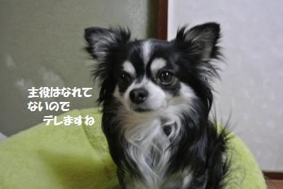 DSC_3651_convert_20140311130729.jpg