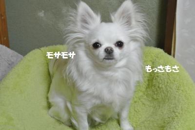 DSC_3671_convert_20140314152006.jpg