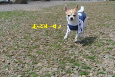DSC_3845_convert_20140320132553.jpg