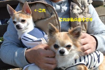 DSC_3890_convert_20140320132814.jpg