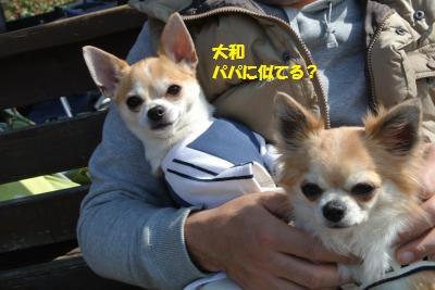 DSC_3891_convert_20140320132828.jpg
