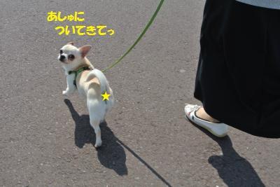 DSC_4037_convert_20140401111537.jpg