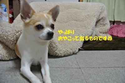 DSC_4318_convert_20140411084631.jpg