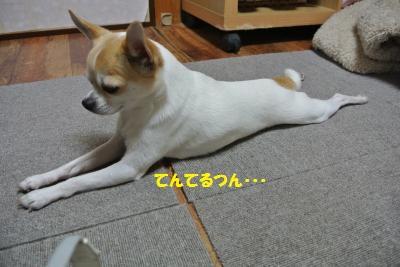 DSC_4320_convert_20140411084701.jpg