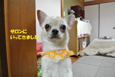 DSC_4339_convert_20140414104037.jpg