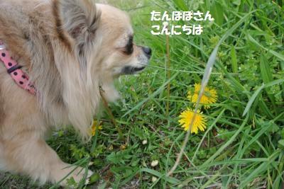 DSC_4385_convert_20140415085236.jpg