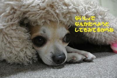 DSC_4409_convert_20140417100441.jpg