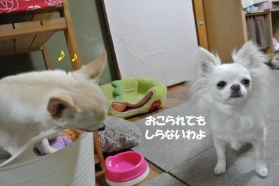 DSC_4441_convert_20140418105712.jpg