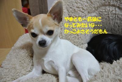 DSC_4476_convert_20140423111242.jpg