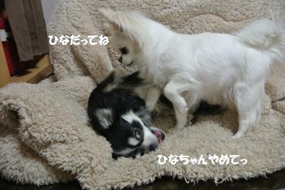DSC_4488_convert_20140421102805.jpg