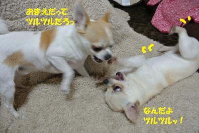 DSC_4544_convert_20140422095813.jpg