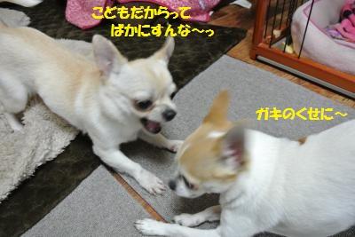 DSC_4558_convert_20140422095824.jpg