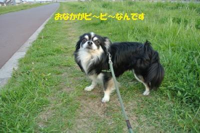 DSC_4588_convert_20140424110302.jpg