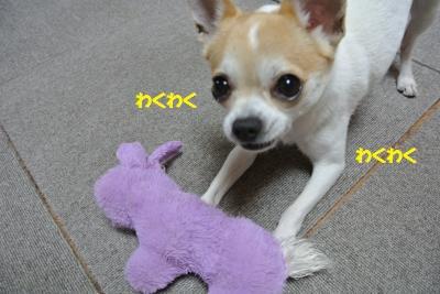 DSC_4609_convert_20140425111911.jpg
