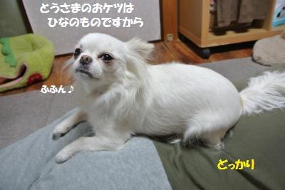 DSC_4722_convert_20140430104118.jpg