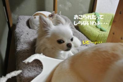 DSC_4737_convert_20140501102459.jpg