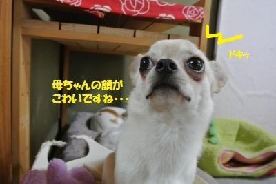 DSC_4746_convert_20140501102606.jpg