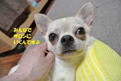 DSC_4772_convert_20140509151219.jpg