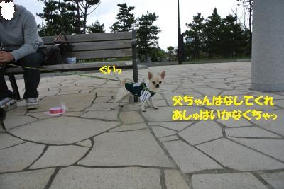 DSC_4809_convert_20140509091731.jpg
