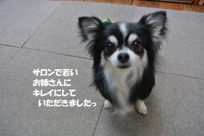 DSC_5029_convert_20140512100810.jpg